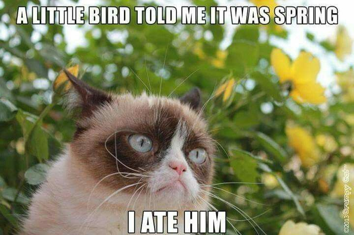 Happy First Day Of Spring Grumpy Cat Humor Cat Quotes Funny Funny Grumpy Cat Memes