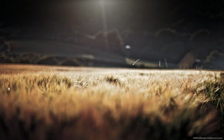 Grain Field At Night Free Hd Wallpaper Landscape Light In The Dark Depth Of Field
