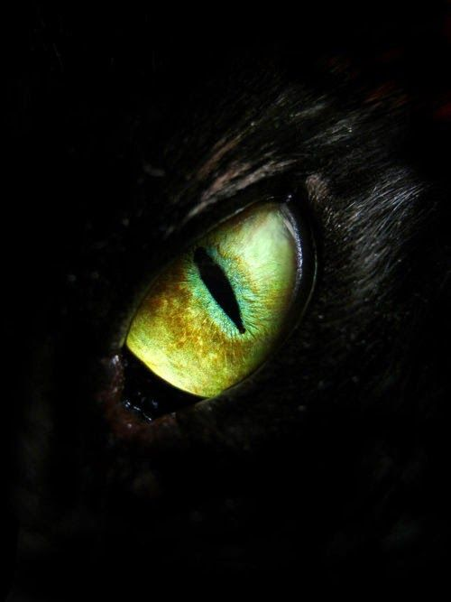 Dragon Gothic Red Eye Close Up Pupil Giant Wall Art Poster Print