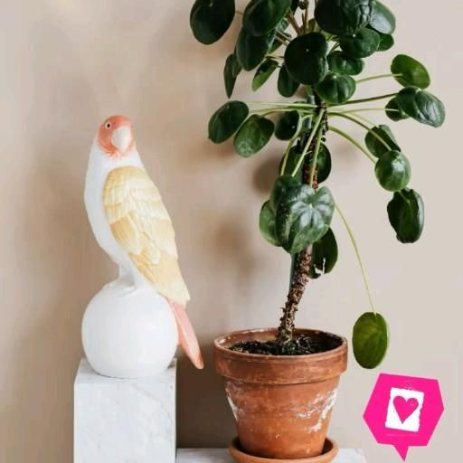 Plant decor style , home and garden decoration #decorhome #plant