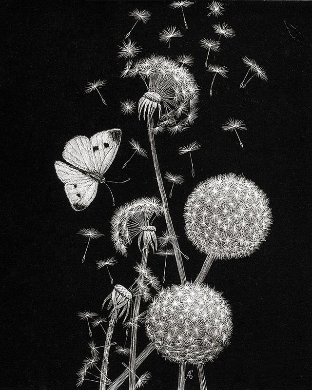 1904 The Proud Old Dandelions