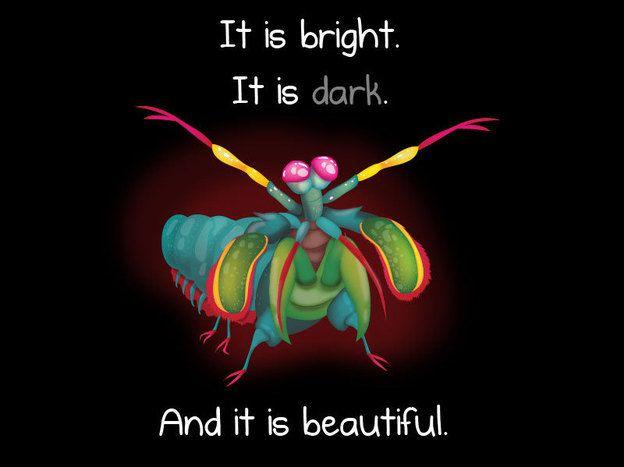 Pretty Mean: Mantis Shrimp