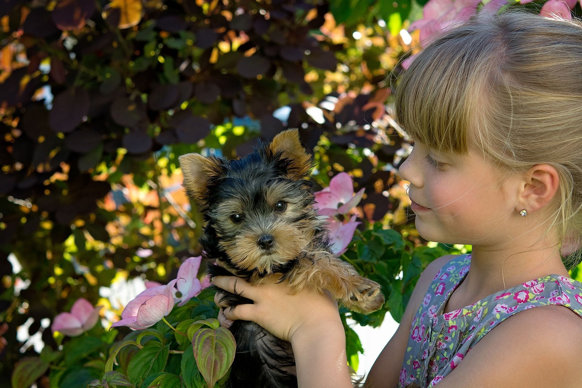 14 Of The Best Small Dog Breeds For Families In 2020 Training Your Dog Yorkshire Terrier Yorkshire Terrier Puppies