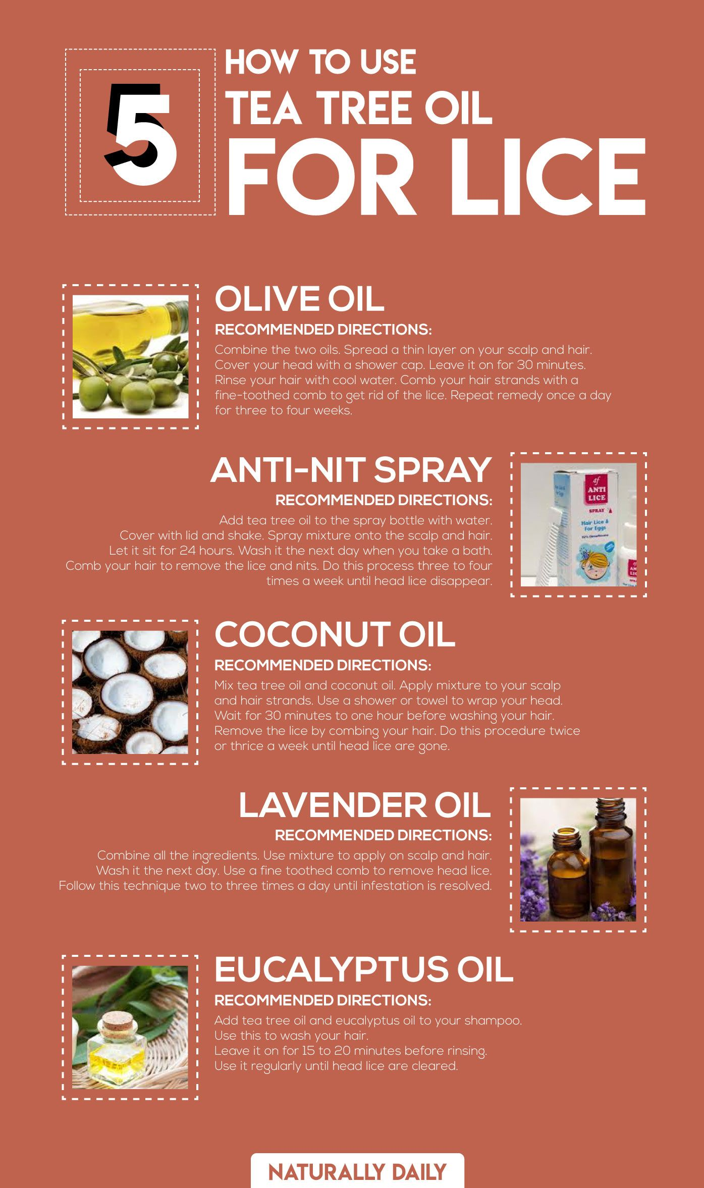 Tea Tree Oil For Head Lice 5 Effective Ways To Try Lice