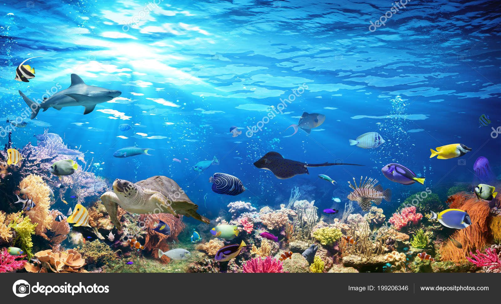 Scene Sous Marine Avec Recif Corallien Et Poissons Exotiques En 2020 Animaux Marins Animaux Paysage Sous Marin