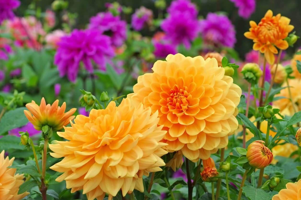 Jardin les fleurs à planter au printemps Fleurs de