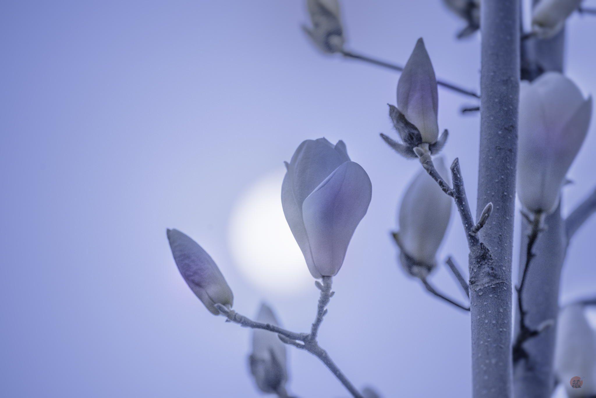 月光 Kiyoshi Iida