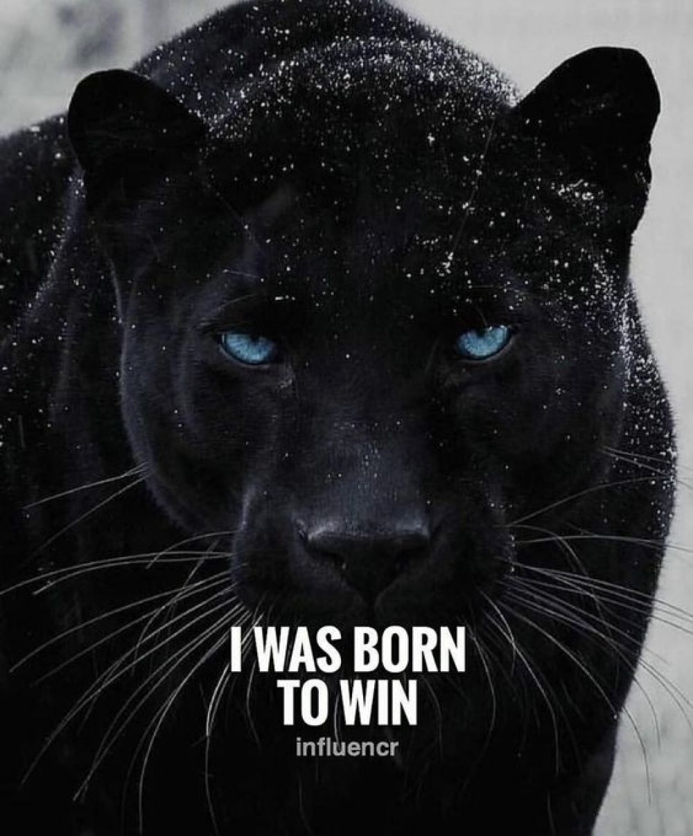 Fight For Your Dreams That S Why Your Are Born Brigitte Black Fight For Your Dreams Dream Motivation Black Panther Quotes