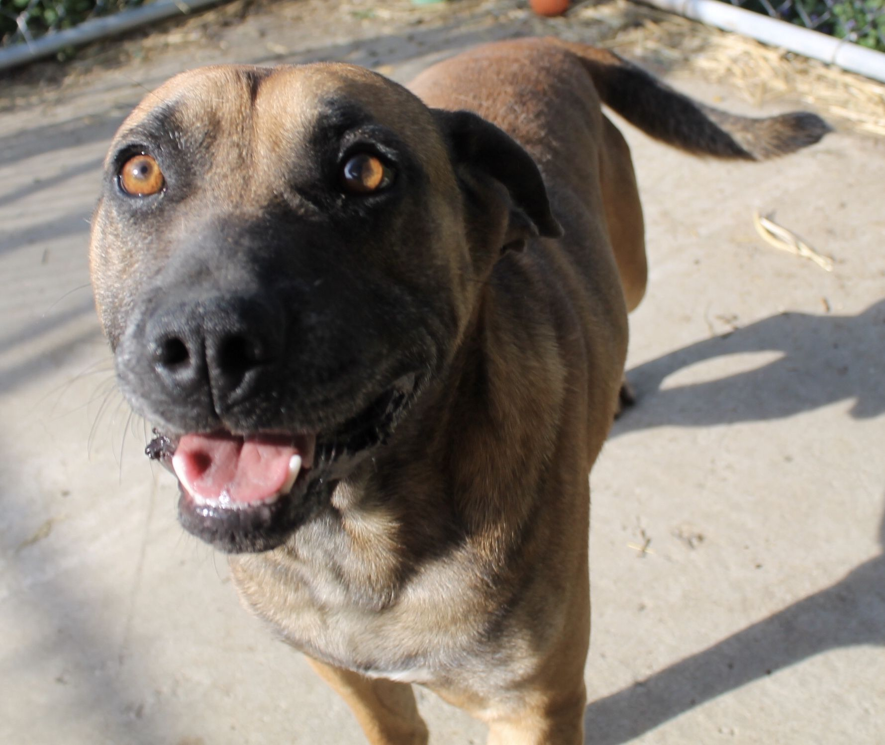 Adopt Chubbs on Petfinder Pet adoption, Dogs, Adoption