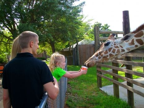 A young visitor makes friends with a giraffe at the Gulf Breeze Zoo in northwest Florida.