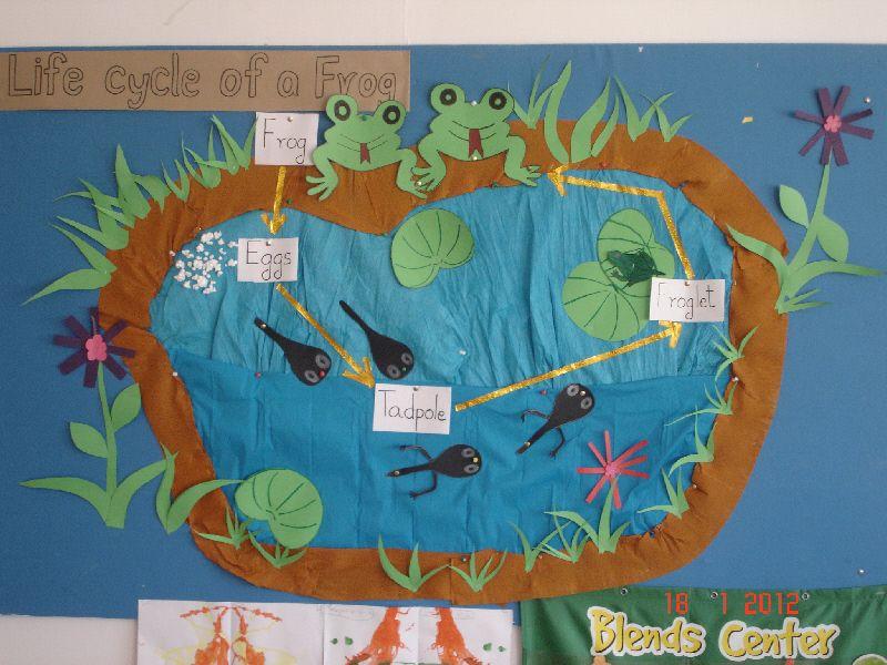 Classroom Decor Tips ~ Life cycle of a frog classroom display photo