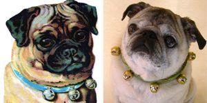 Victorian Dog And Pug Bell Collars Www Celebrana Com Pugs Dogs