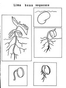 Colouring Picture Of A Seed Life Cycles Preschool Worksheets Coloring Pages