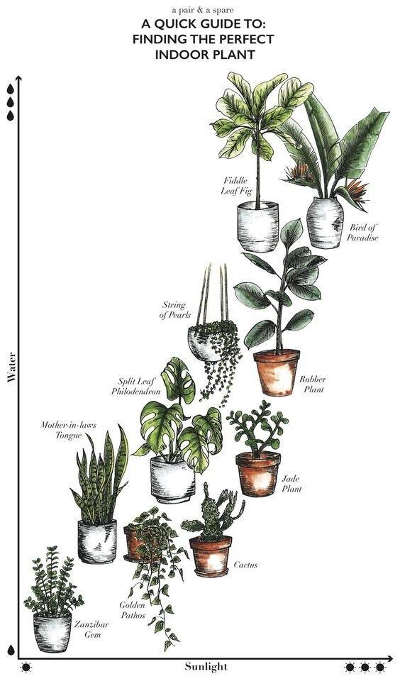 Lerne ENDLICH, welche Zimmerpflanzen du bei dir am Leben erhalten kannst. Eine große Pflanze verleiht jedem Raum einen modernen Touch (ohne dass du dafür viel ausgeben musst).