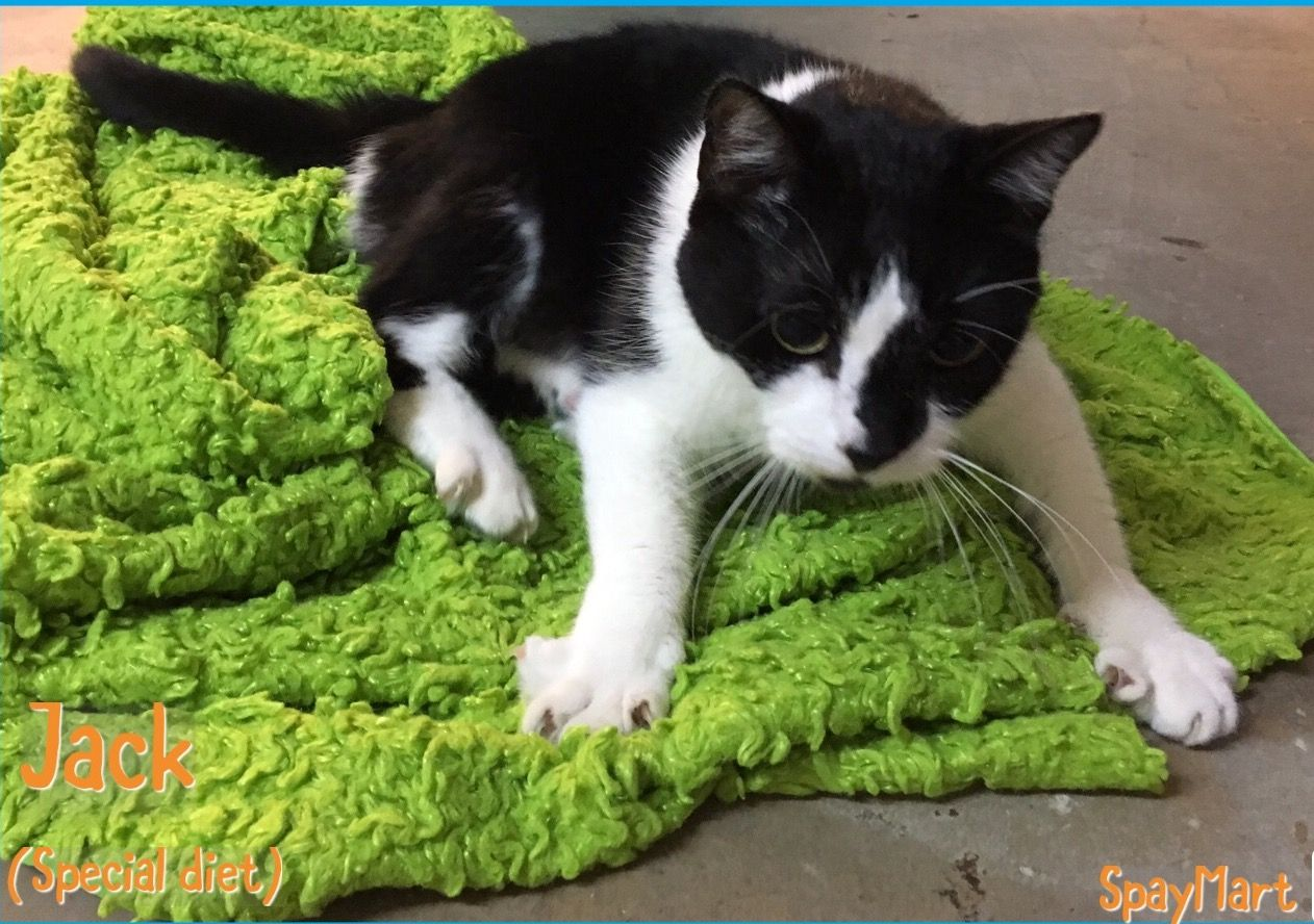 Pin by SpayMart on Adopt SpayMart Special Needs Cats
