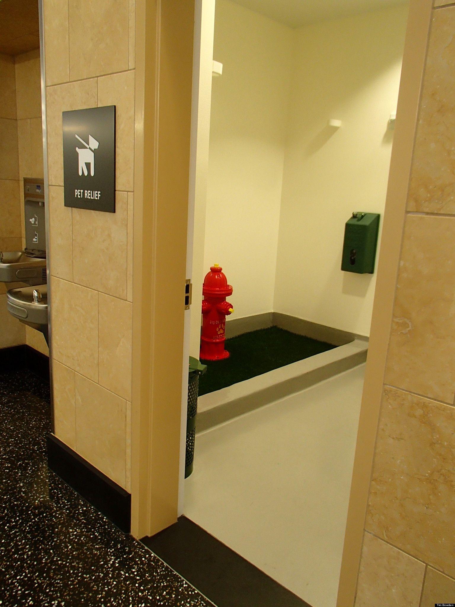Indoor Dog Bathroom Bathroom Ideas Pinterest