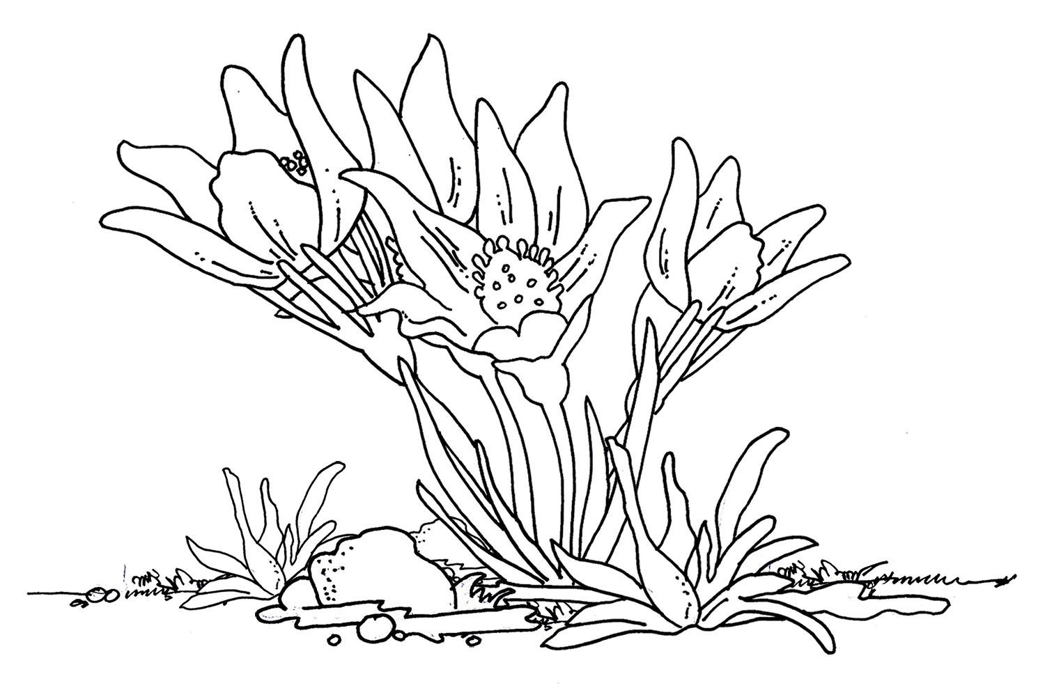Flower coloring sheet for teens flowers pinterest flower and