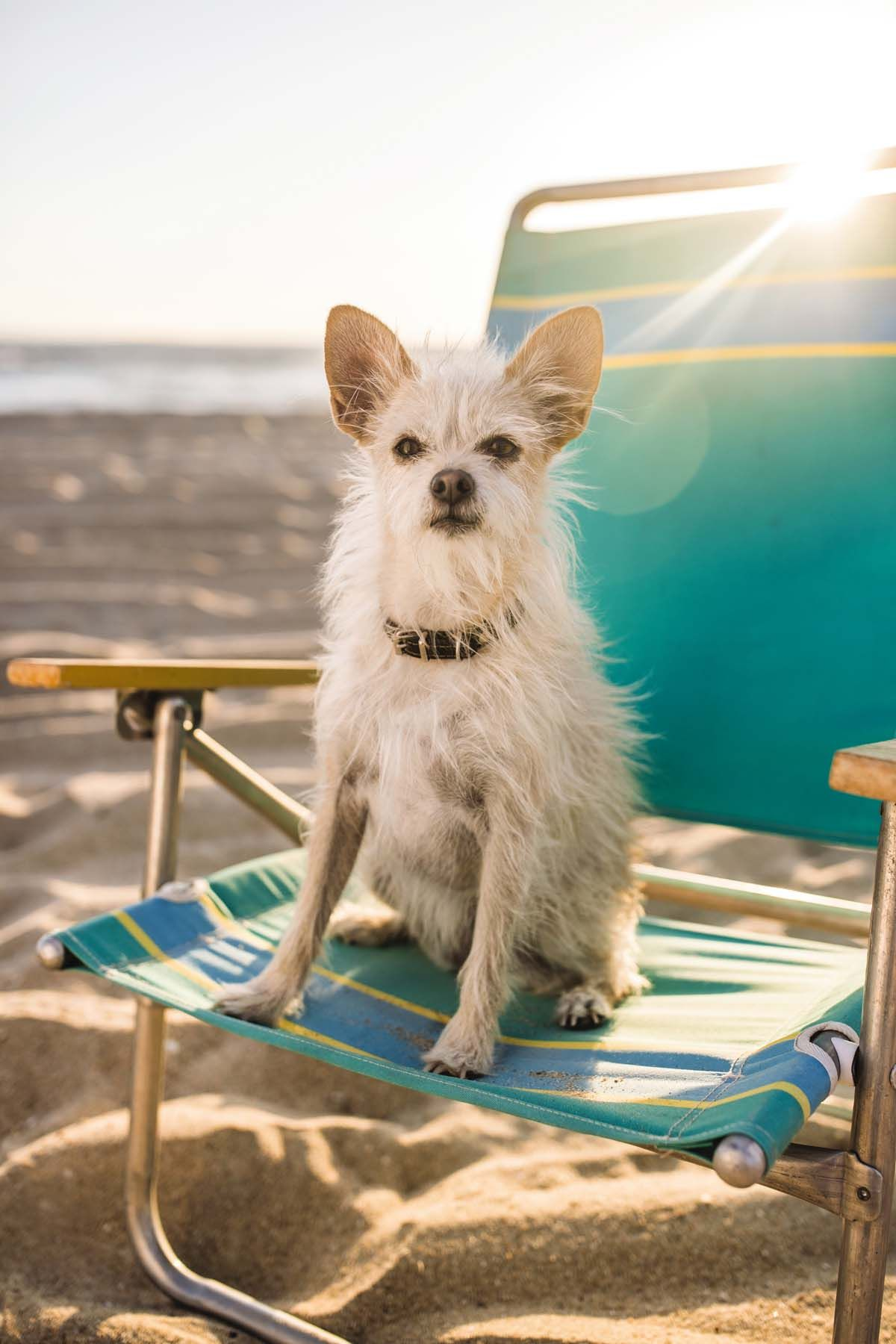 Ready, set... beach! If you're traveling with your pet