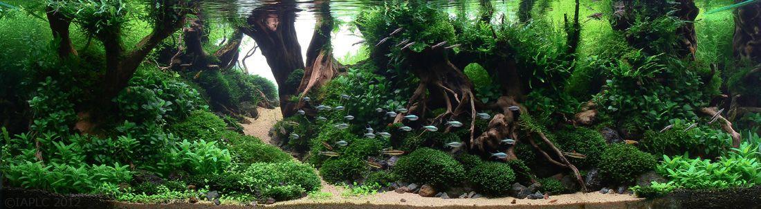 Tips And Tricks On Creating Amazing Aquascapes Page 44 Reef Central Online Aquascape Planted Aquarium Nature Aquarium