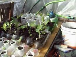 plantio de hortas ecologico - Pesquisa Google