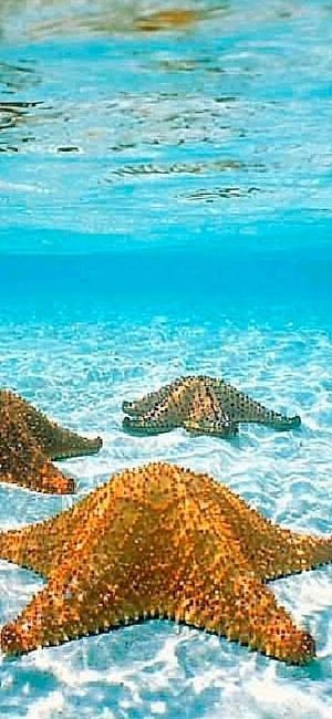 Here is my list of 10 of the most awesome Reasons to scuba Dive in Cozumel, Mexico.
