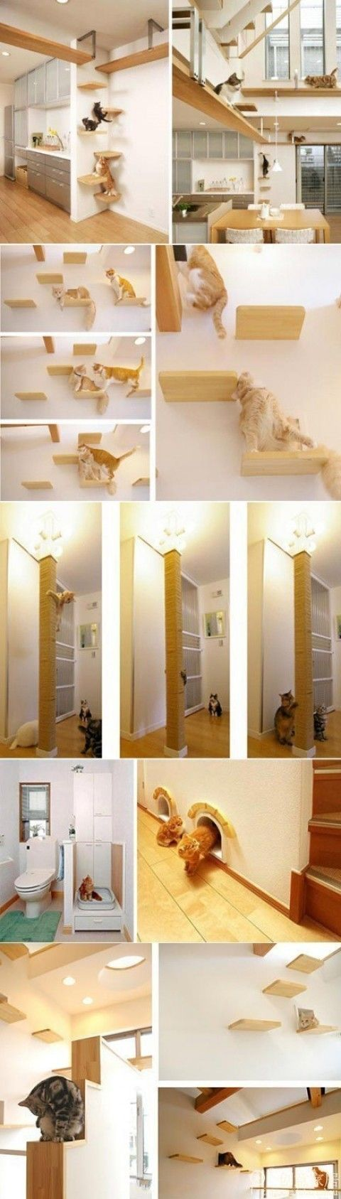 Uncategorized Cat Walkway In House eine wohnung eingerichtet katzen tiere gehege pinterest cat house a cats wildest dreams come true this is also crazy ladys dream i want things like t