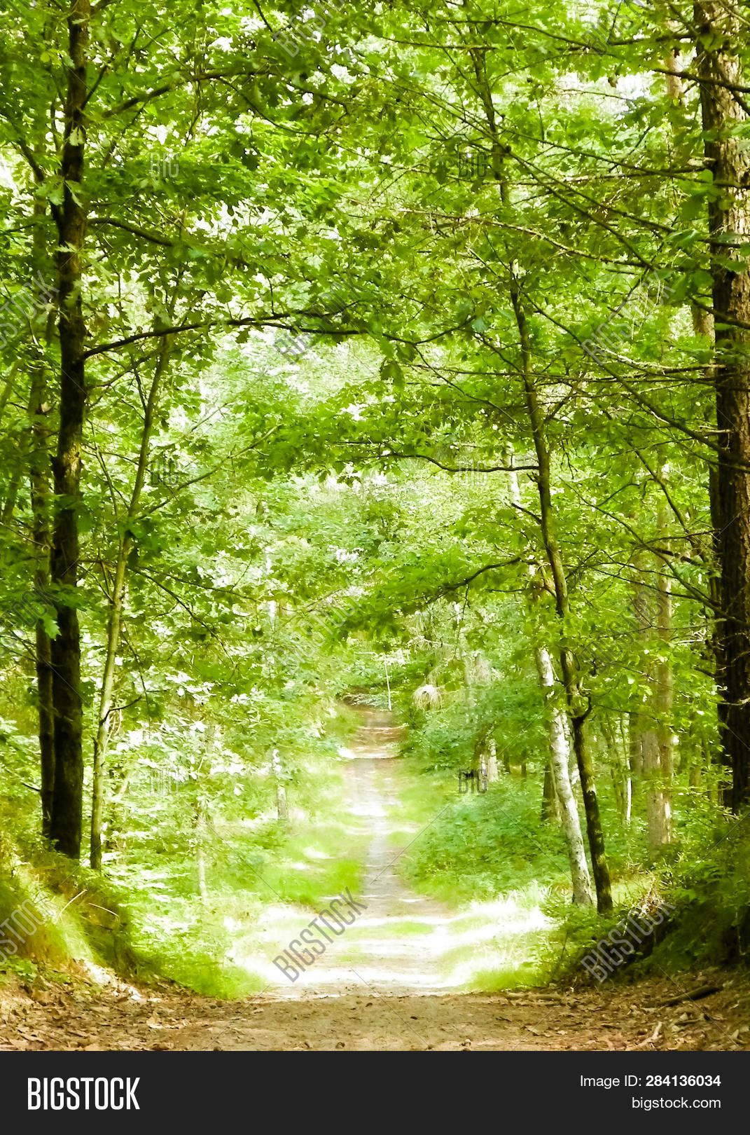 Green Forest In Sunny Day Nature Naturebeauty Naturephotography Best Nature Images Nature Photos Nature Photography