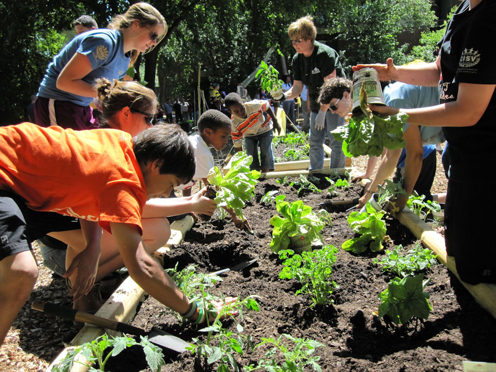 Kids in vegetable garden google search a grocery store for Gardening tips for kids