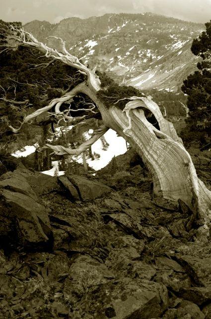 Desolation Wilderness, California