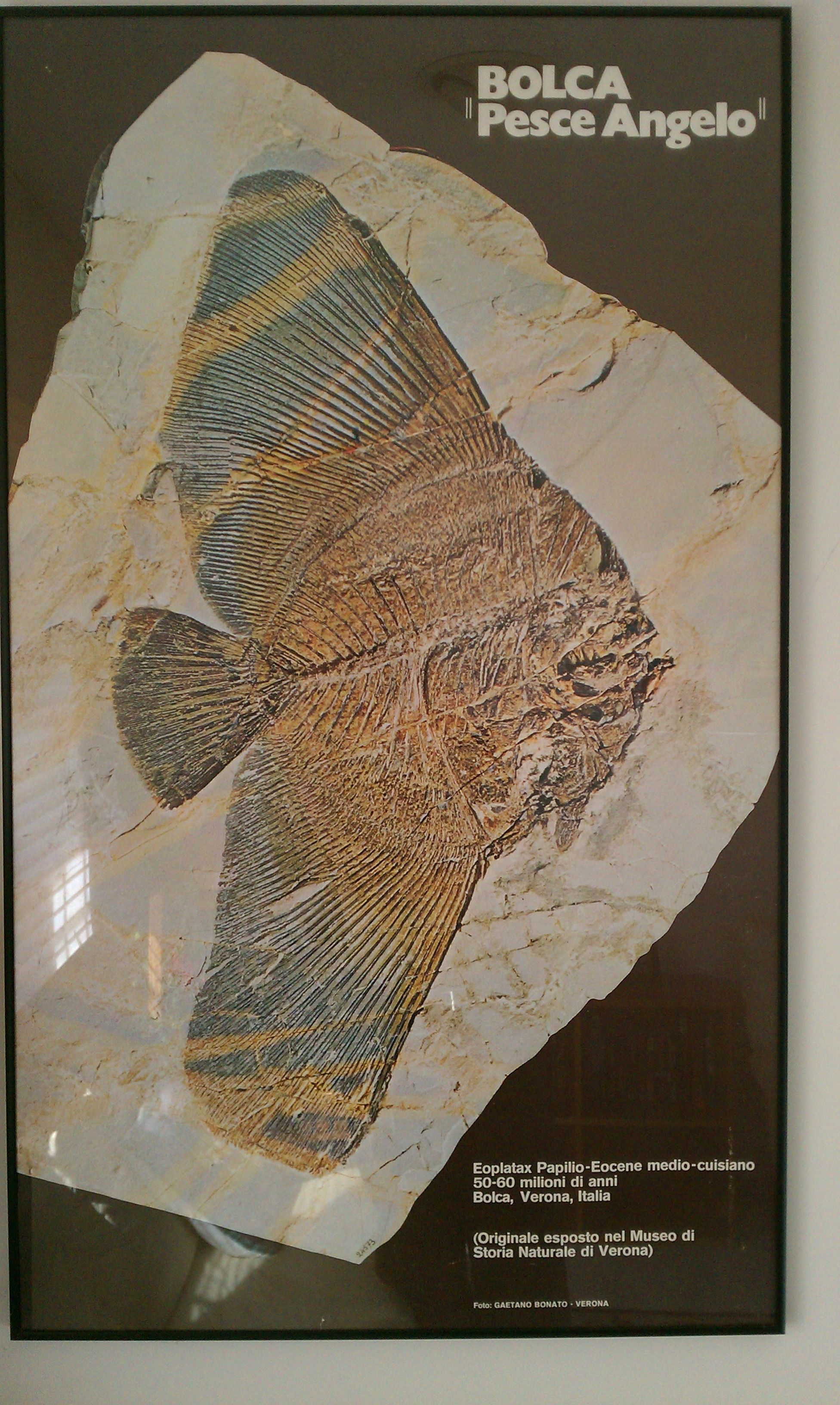 Previous Pinner Had This Print Of Very Famous Fossil Framed Went