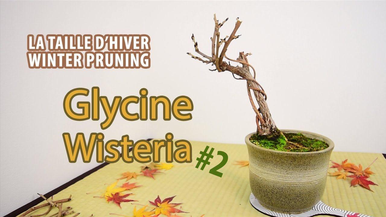 Une Glycine En Pot pin na nástěnce květiny & sukulenty