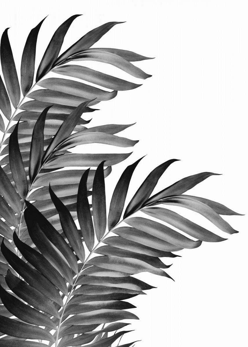 Palm Leaves Black 1 Poster Art Print By Anita S Bella S Art Displate Black And White Photo Wall Black And White Picture Wall Black And White Wall Art