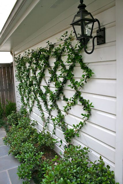 Espalier i always wanted to try this garden and trowel for Wire garden trellis designs