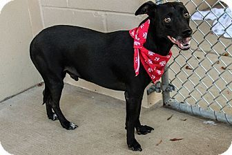 McKinney, TX - Terrier (Unknown Type, Small) Mix. Meet Skipper, a dog for adoption. http://www.adoptapet.com/pet/11586769-mckinney-texas-terrier-unknown-type-small-mix