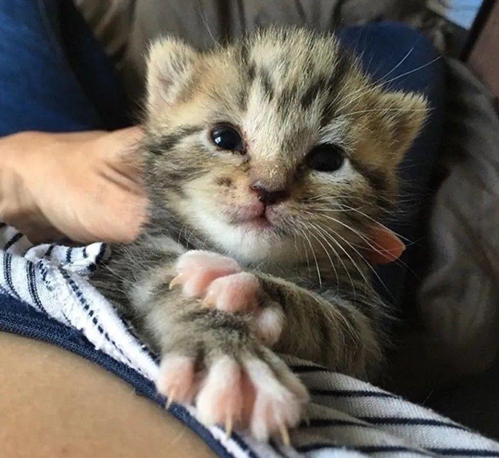 Pin By Nunui Sunshine On Project To Love In 2020 Cat Lovers Kitten Kittens Cutest