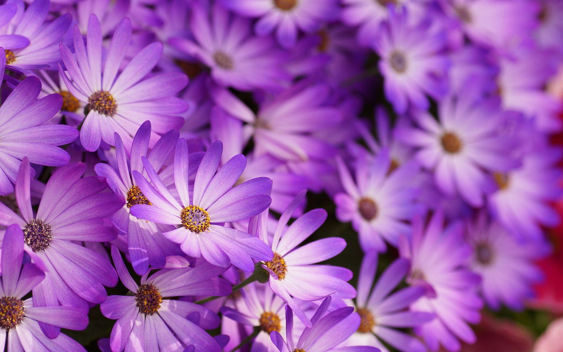 Purple Flower Pattern Wallpaper 396