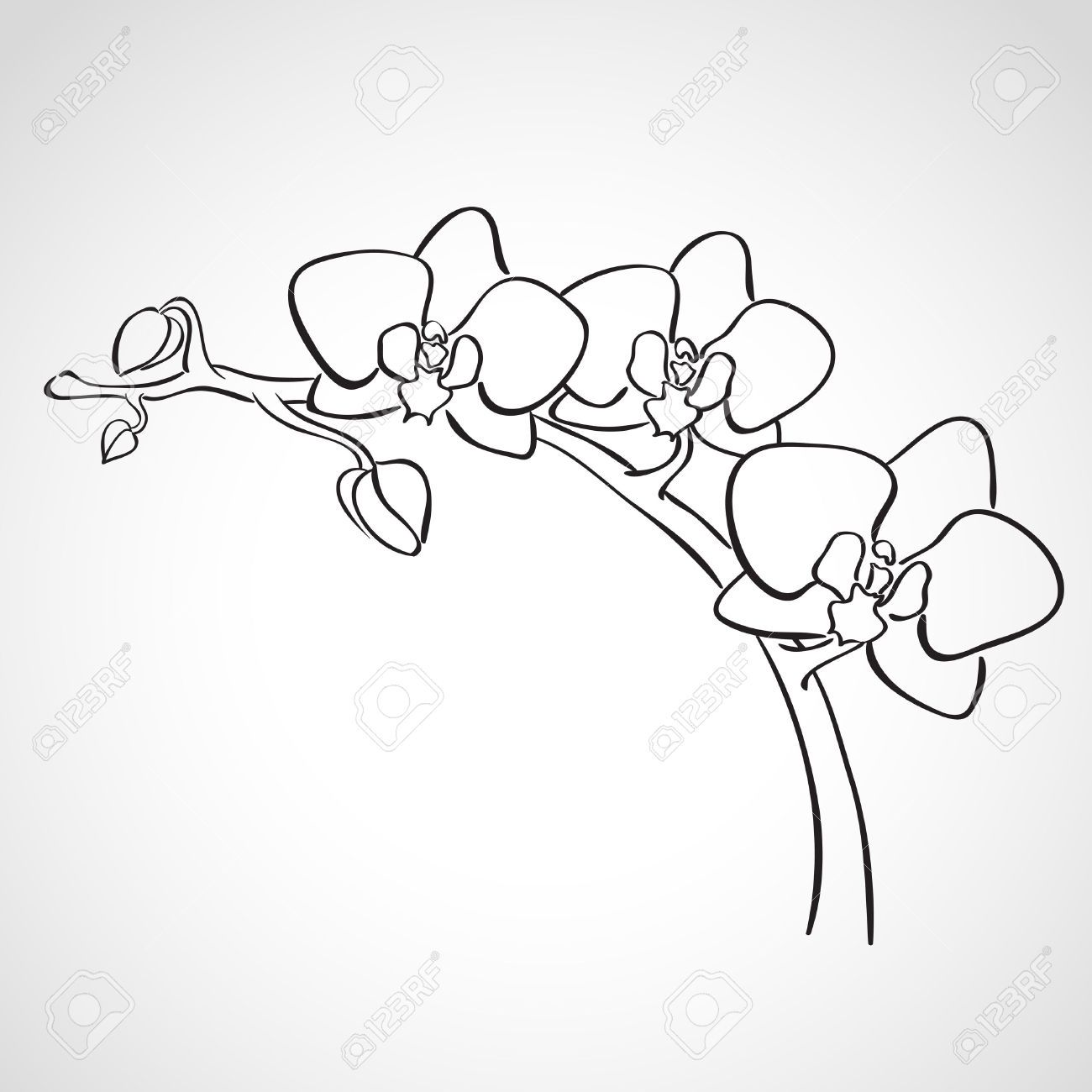 Orchid Flower Line Drawing : Sketch orchid branch hand drawn ink style stock