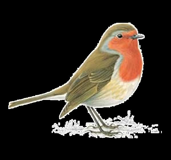Tube Rouge Gorge Tube Oiseau Dans La Neige Merle Rouge Gorge Oiseau Oiseaux