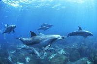 御蔵島ドルフィン・スイム・プログラム | KAZとイルカと仲間たち