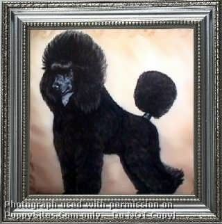 Maja Poodles Dogs And Puppies