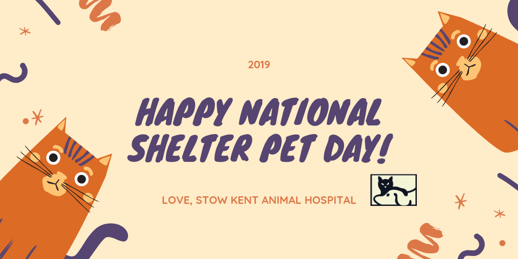 Adopt Donate And Volunteer To Help Pets In Your Community With Images Animal Hospital Pet Clinic Pet Day