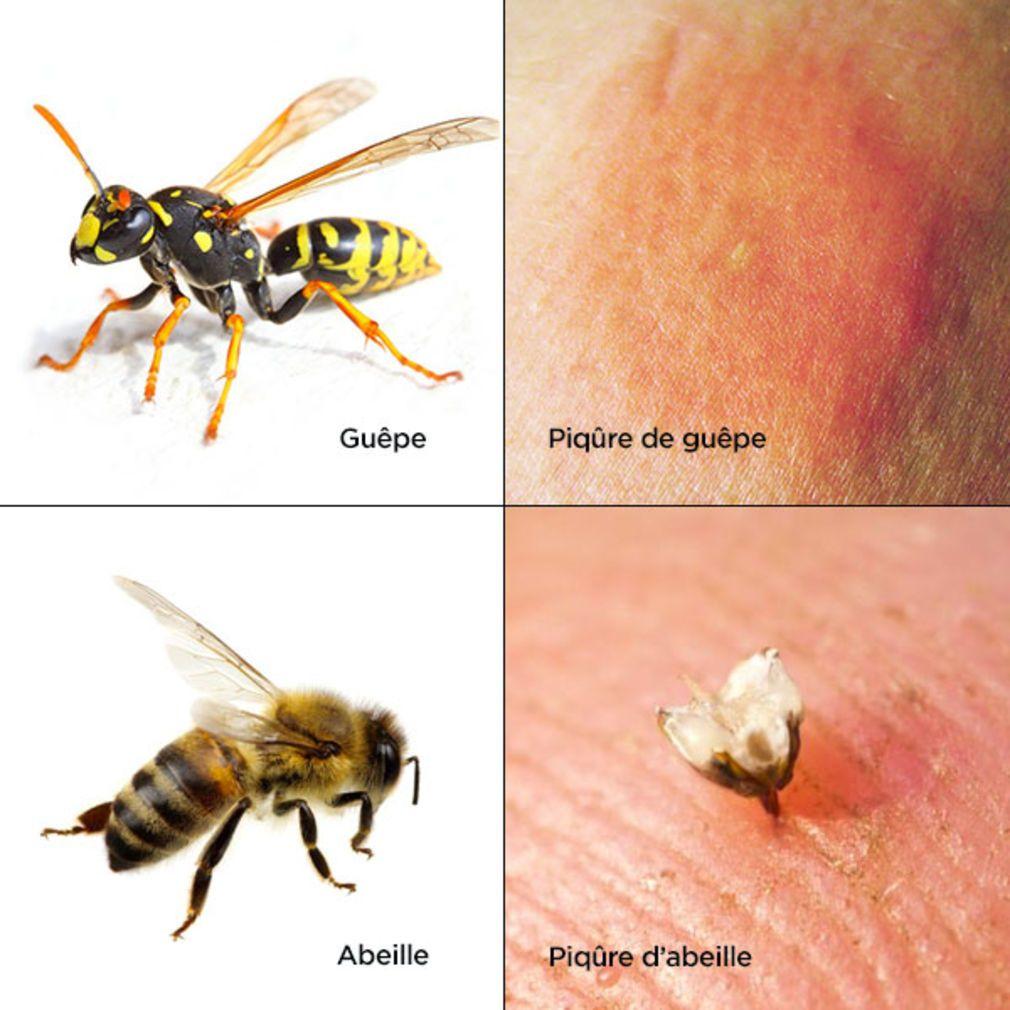 piq res d insectes comment reconna tre quel insecte vous. Black Bedroom Furniture Sets. Home Design Ideas