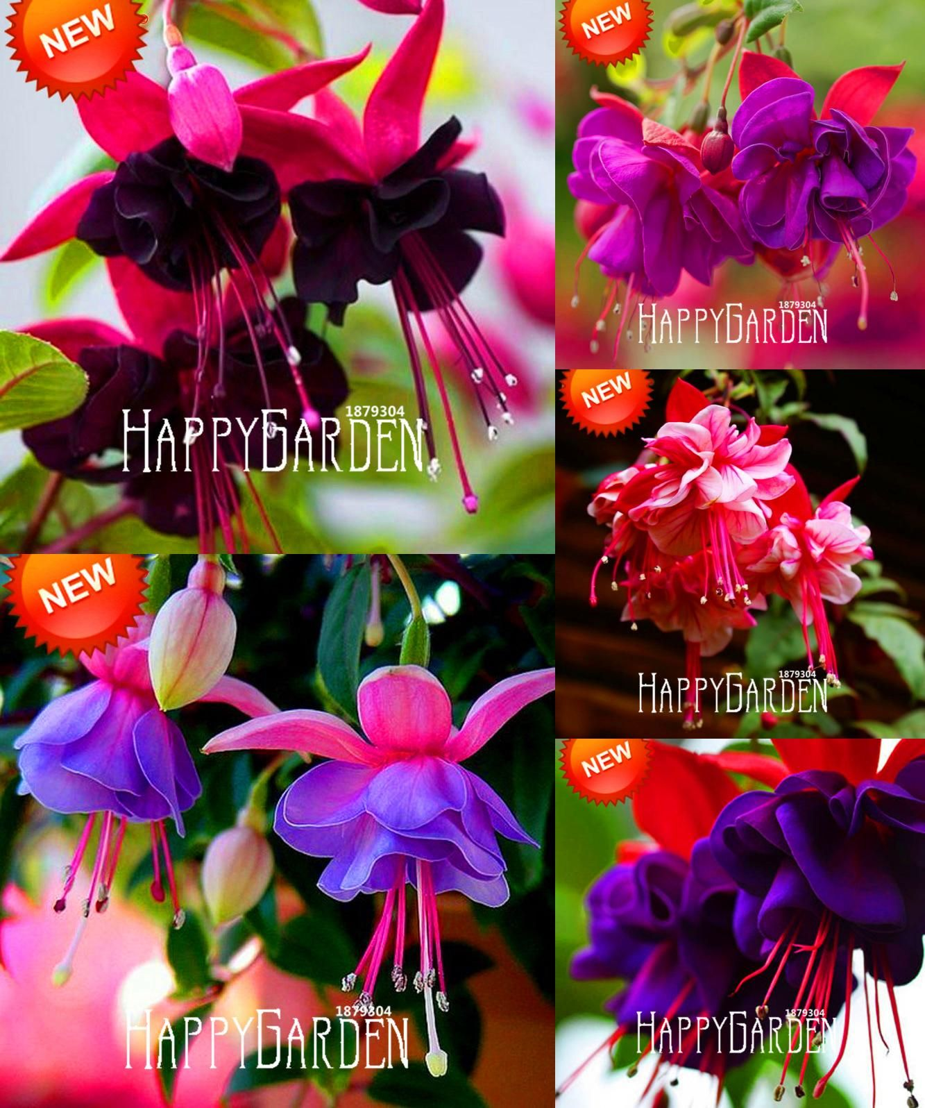 Visit To Buy Hot Sale Purple Double Petals Fuchsia Seeds Potted Flower Seeds Potted Plants Hanging Fuchsia Flowers Fuchsia Seeds Fuchsia Flowers Flower Seeds