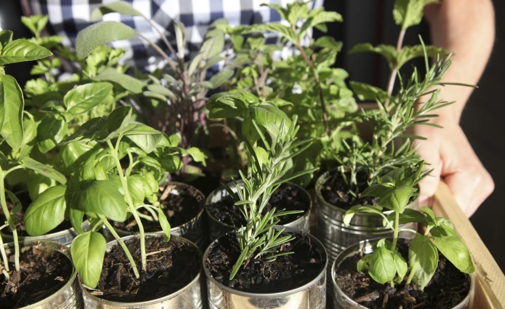 Urban Gardening: Erntespaß auf kleinstem Raum #anbauvongemüse