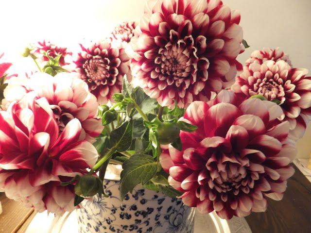klara&kapucine: flowers
