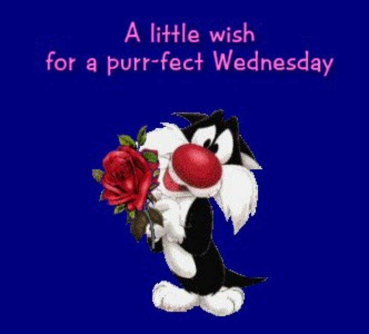 A Little Wish For A Purr Fect Wednesday Days Of The Week Wednesday Wednesday  Greeting Good Morning Wednesday Wednesday Quote Animated Wednesday