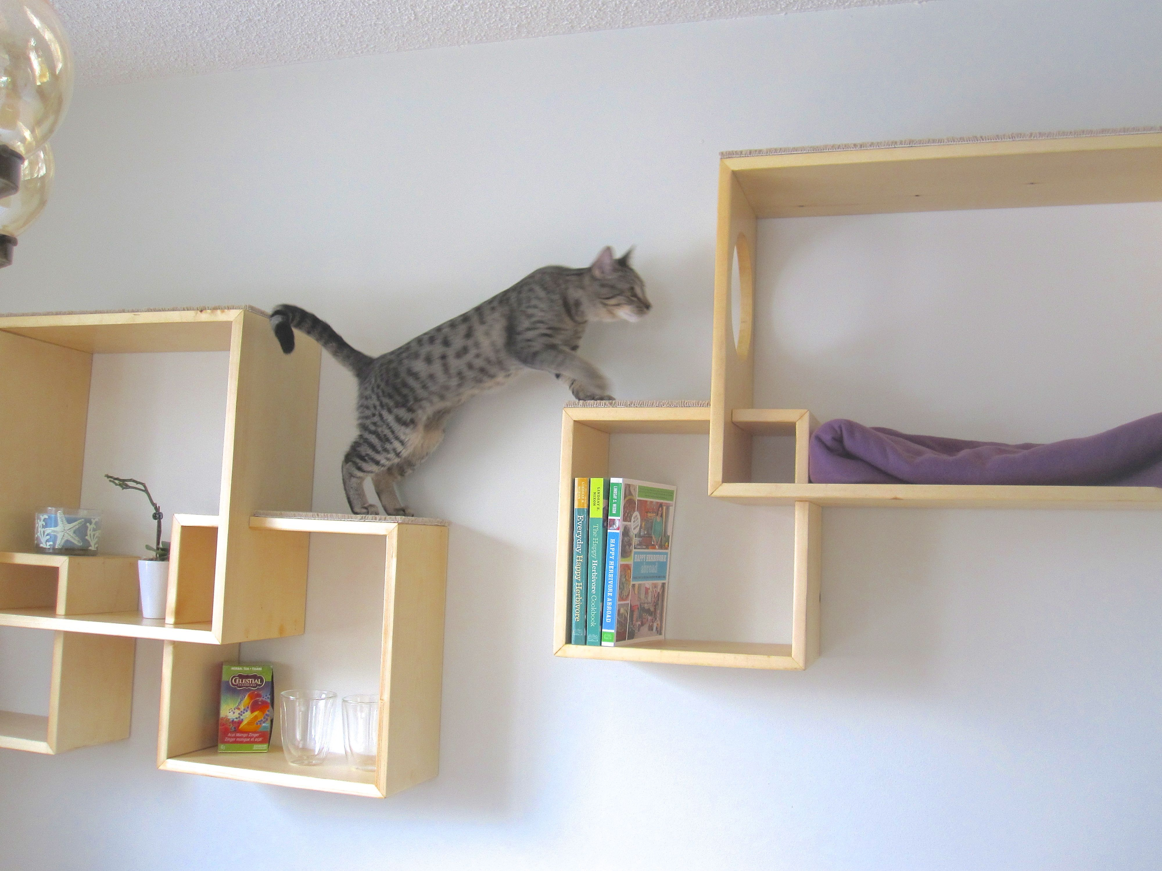 Diy cat wall shelves for kitty and display cat wall