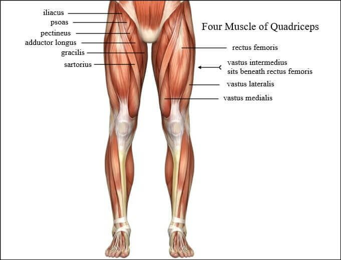 The 6 Absolute Best Quads Exercises You Can Do | Übung | Pinterest ...