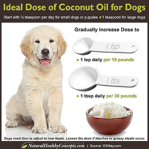 Coconut Oil On Why Does My Dog Make Me Itch Itchy