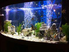 Can A Pet Rat Live In A Fish Tank Pinterest Aquarium Ideas